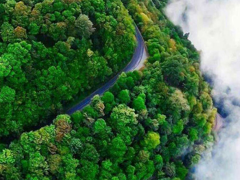 Forests in the north of Iran