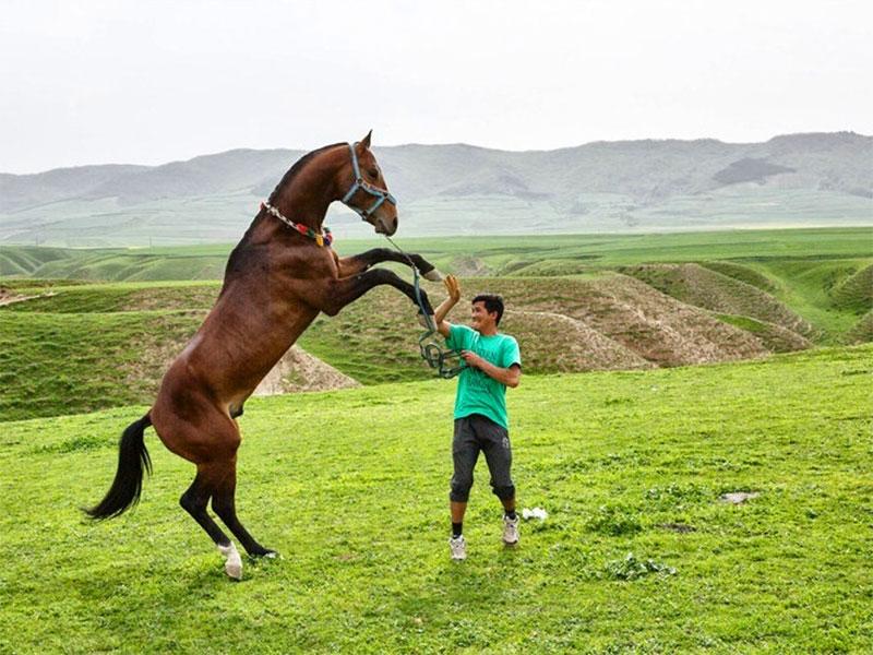 horse breeding - Khalid Nabi - Iran