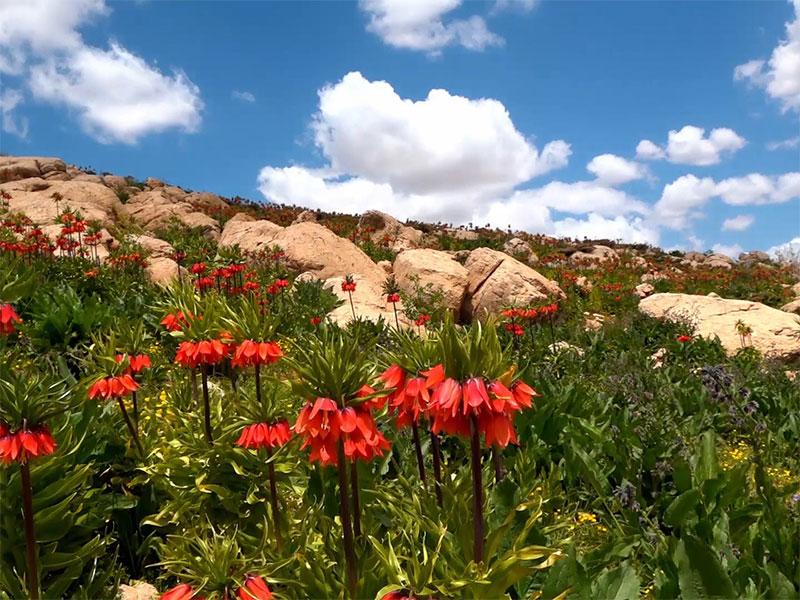 Zardkooh attractions - tulip plain