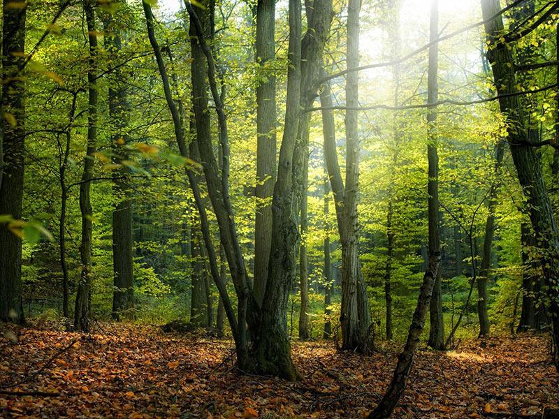 Hyrcanian-forest-Iran