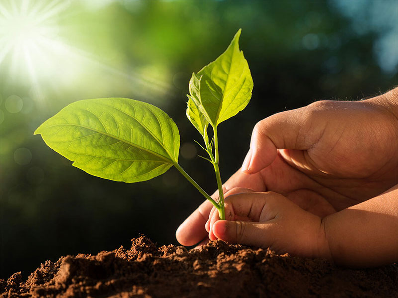 Plant a tree - earth day