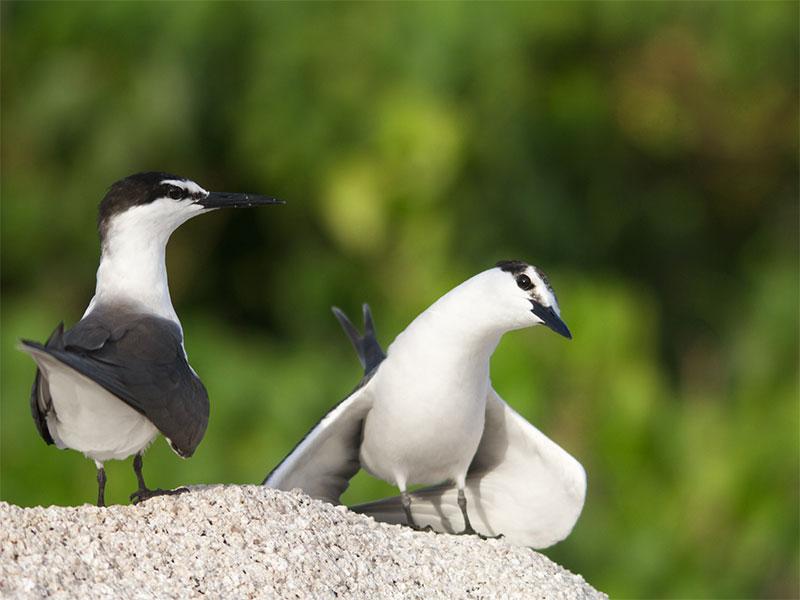 Birdwatching-in-IRan