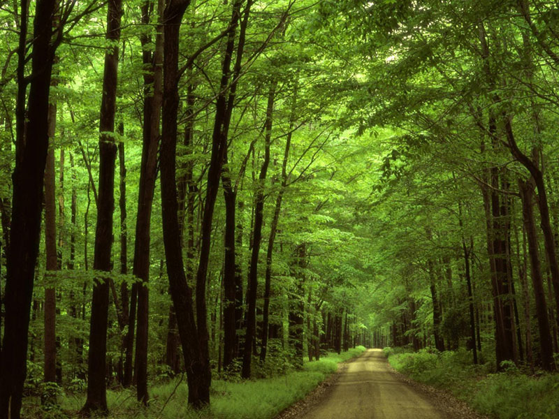 Cycling routes in Iran-Gisoom Forest